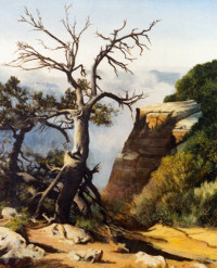 Landscape with rocks and a gnarled old tree.
